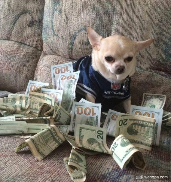 搞笑狗狗图片 土豪狗狗 这是一只有钱的狗狗-嗡啪搞笑狗狗图片