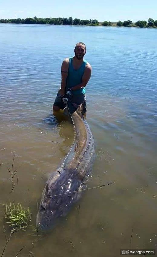 钓获一条大鱼 简直就是一头怪兽啊
