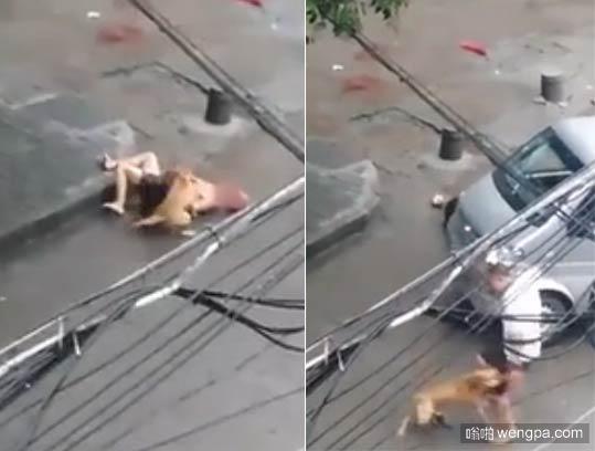 【视频】比特犬撕咬主人 警方经得狗主人同意后三枪击毙