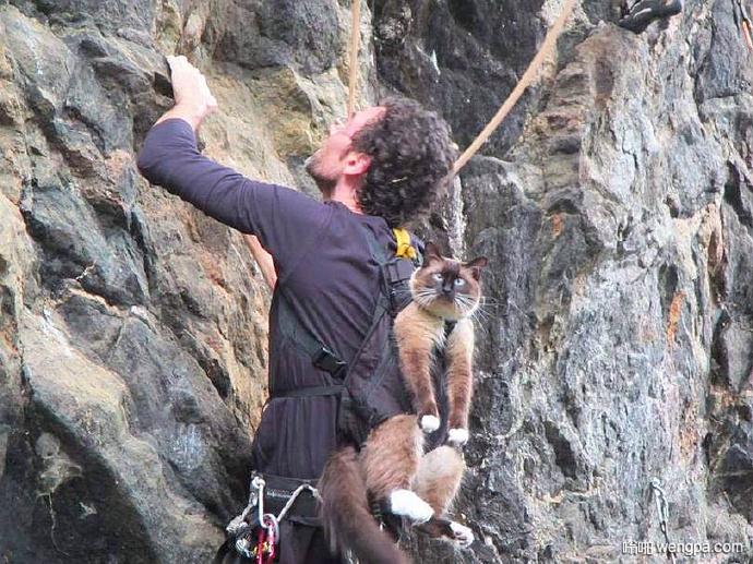 被热情的主人强行背着攀岩的喵,一脸懵逼……
