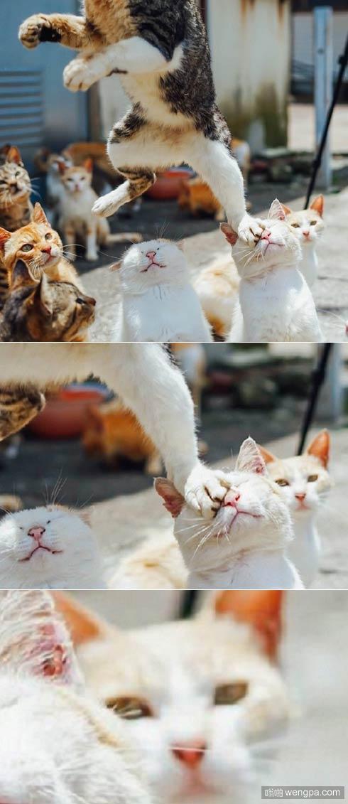"""岛国一推友抓拍猫咪""""无影腿""""功夫 旁边小猫看呆 搞笑小猫 - 嗡啪萌宠图片"""