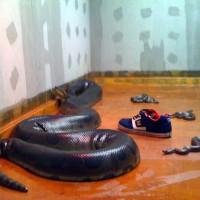 加拿大新不伦瑞克省坎贝尔顿镇发生蟒蛇勒死人惨剧,一家宠物店供出售的蟒蛇逃脱,疑沿着通风系统潜入楼上的住宅单位,将两名睡梦中的男童活生生勒死。据悉,这两名男童年仅5岁和7岁,是一对亲兄弟。