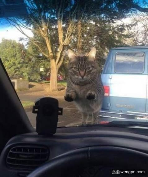 【小猫萌宠图片】上班迟到了却忘了喂猫,小猫怒了当你上班迟到了 却忘了喂猫 - 嗡啪萌宠图片