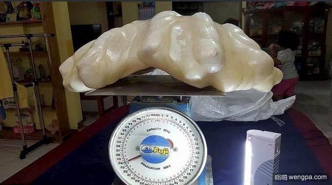 世界最大的珍珠 菲律宾渔民发现68斤重珍珠 价值1亿美元