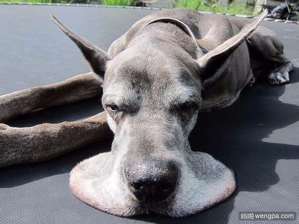 你的狗已经融化
