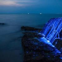 日本海岸的夜光生物 晚上发出幽暗的蓝光