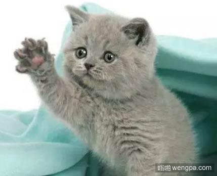 你不要走 可爱小猫萌宠表情