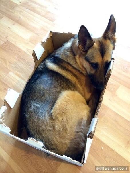 就不能换个大点的盒子么