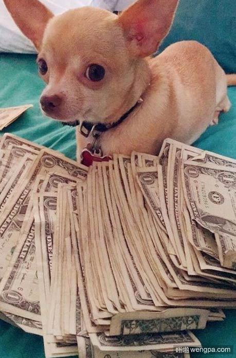据说给这狗狗点赞 你会像它那样有钱_炫富狗狗搞笑图片 - 嗡啪搞笑狗狗