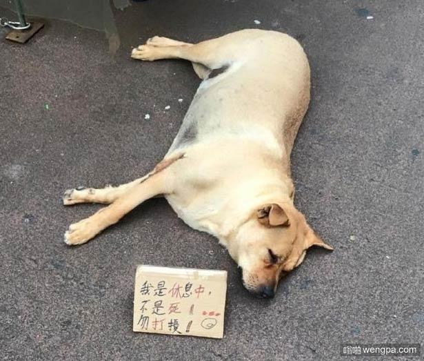 我没死不要打搅我睡觉 狗狗:心好累