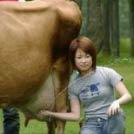 【内涵段子】有个单纯的小女孩,在养牛场挤牛奶