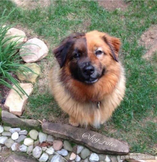 狗狗有一张阴阳脸