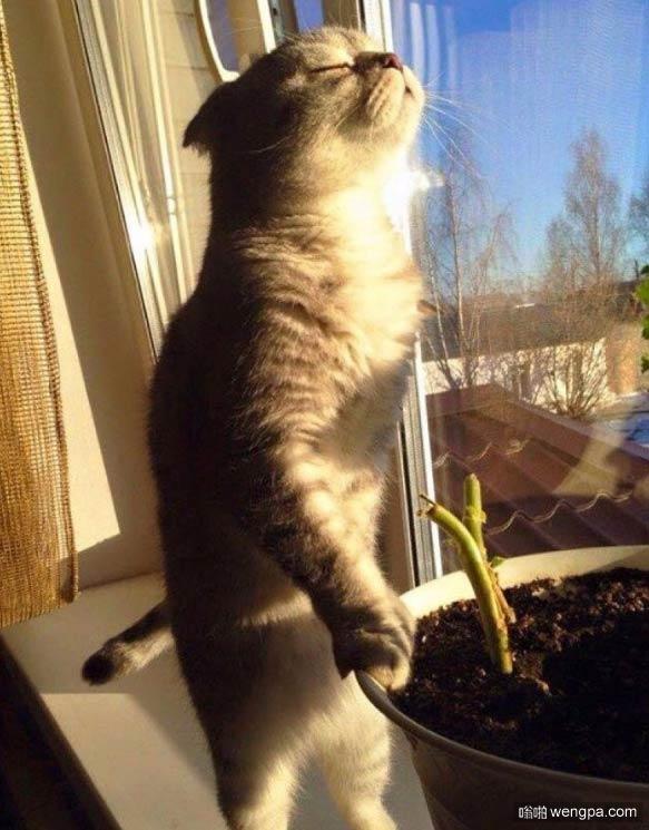 植物清晨迎接阳光