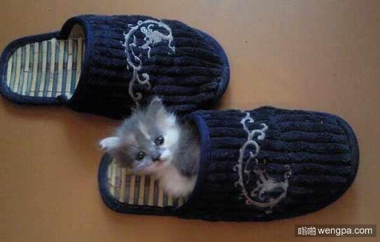 小猫的新睡袋