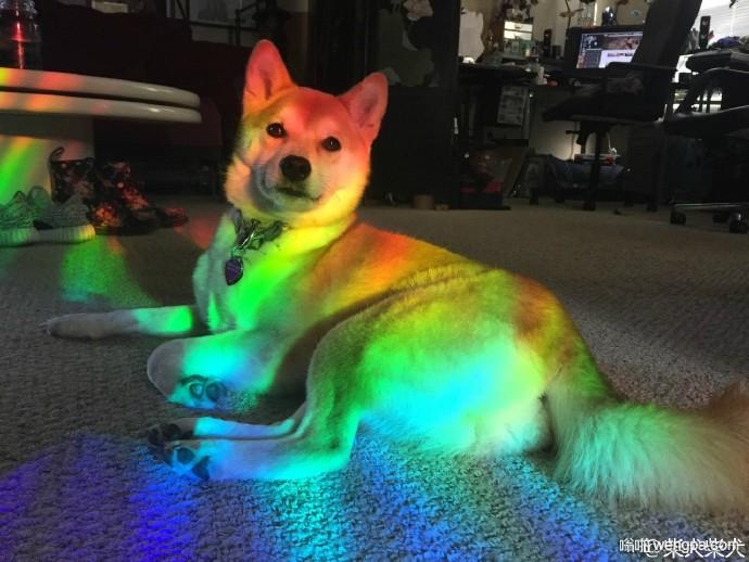 彩虹狗 回忆起当年的D8彩色狗 如今D8早已成为窝狗聚集地 不复当年