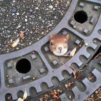 动物们卡在这些奇怪的地方 让人哭笑不得
