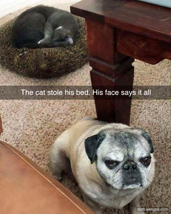 猫占了狗狗的窝 汪星人一脸委屈和喵星人一脸不屑成正比