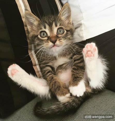 逗逼小猫搞笑图片 可爱小猫萌宠图片(12P)