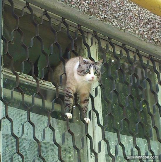 逗逼小猫搞笑图片 可爱小猫萌宠图片4