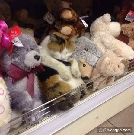 逗逼小猫搞笑图片 可爱小猫萌宠图片5