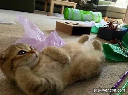 逗逼小猫搞笑图片 可爱小猫萌宠图片6