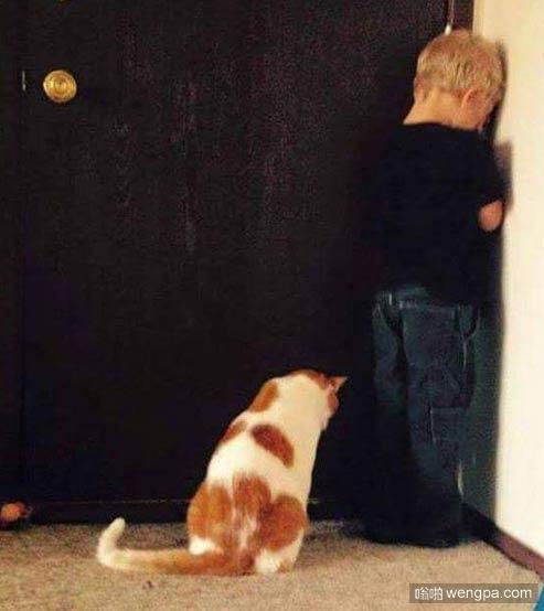 逗逼小猫搞笑图片 可爱小猫萌宠图片8