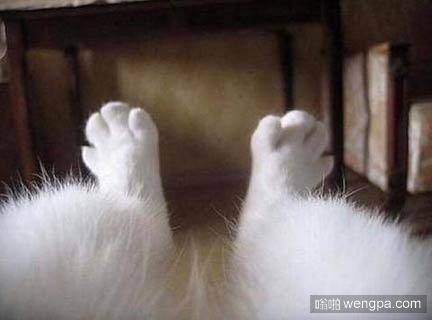 逗逼小猫搞笑图片 可爱小猫萌宠图片9