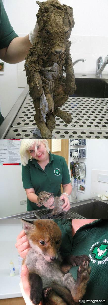 """救援人员救起满身泥巴的""""小狗""""洗干净后发现是一只可爱的小狐狸"""