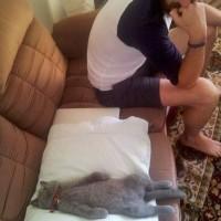 小猫睡在奇怪的地方 搞笑猫咪睡姿图片