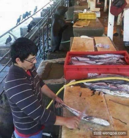 鱼档老板在卖鱼 似乎有什么不对劲_海豹搞笑图片 - 嗡啪网