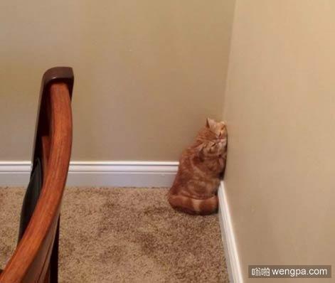 家里的小猫喜欢趴在墙上睡觉