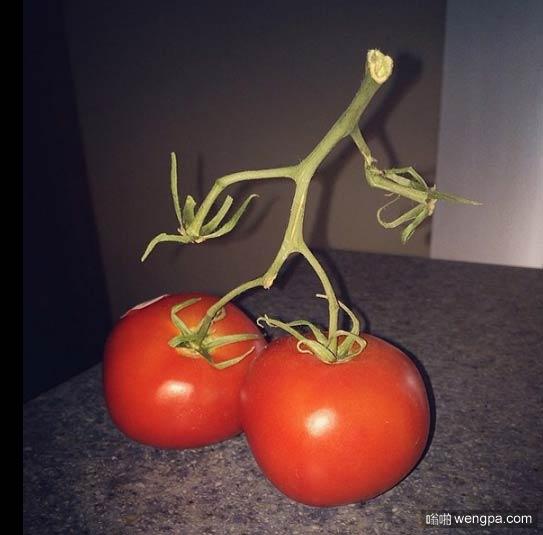西红柿艾辛格 - 嗡啪网