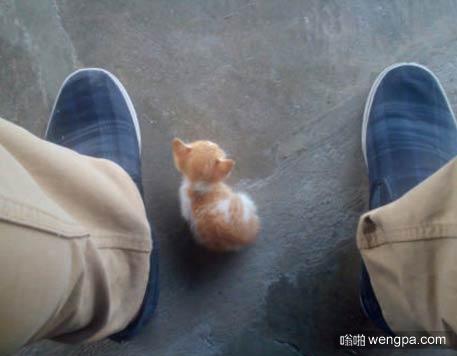 新宠小猫 可爱小猫萌宠图片