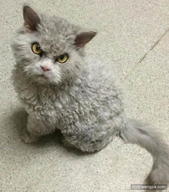 愤怒的小猫 搞笑小猫表情图片 - 嗡啪网