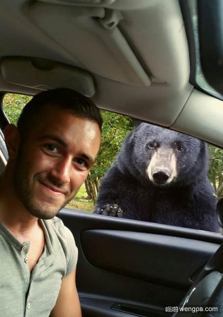在法国杜瓦里野生动物园 与黑熊Baloo合影! - 嗡啪网