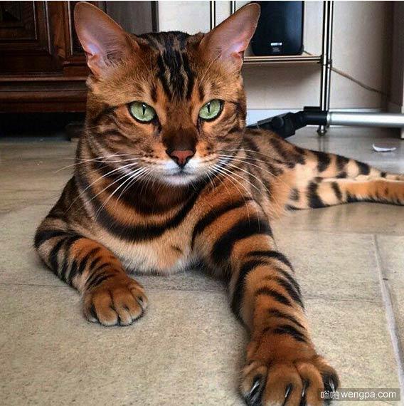 看我的爪子,我是老虎