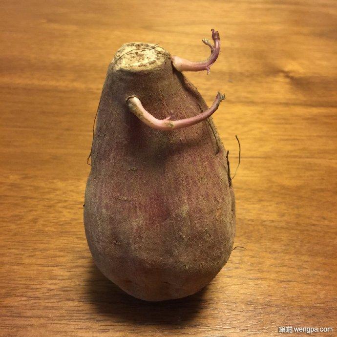 看到这张红薯照片时竟然跟着比划起来了୨(﹒︠ᴗ﹒︡)୨……