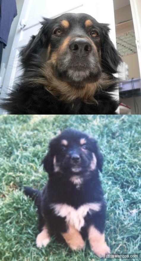 狗狗童年照和现在照片对比