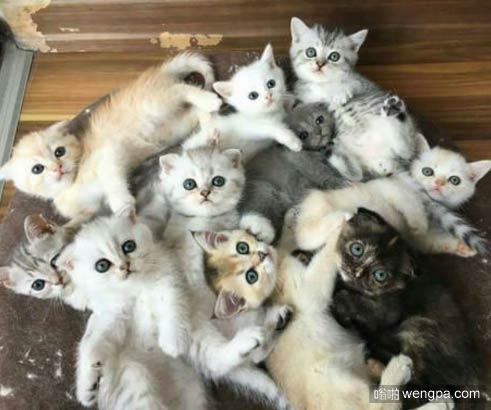 这里是天堂?可爱小猫萌宠图片