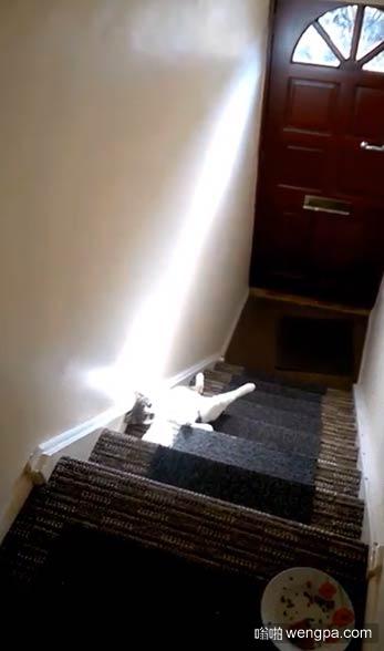 思想家小猫下午享受日光浴