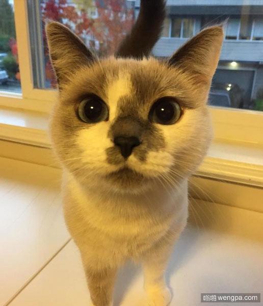 小猫在遇到我们的时候相当胆小,如果我们离它很近,它会嘘声。几个月的耐心和缓慢的进展,它现在是一个快乐的小猫