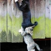 为了帮助别人,是不是一定要坚强,富有 - 足够好。