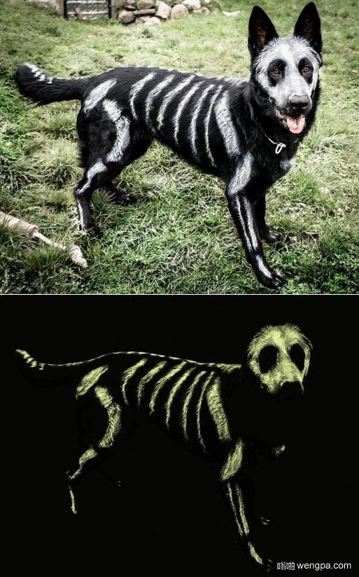 狗狗最佳万圣节装扮