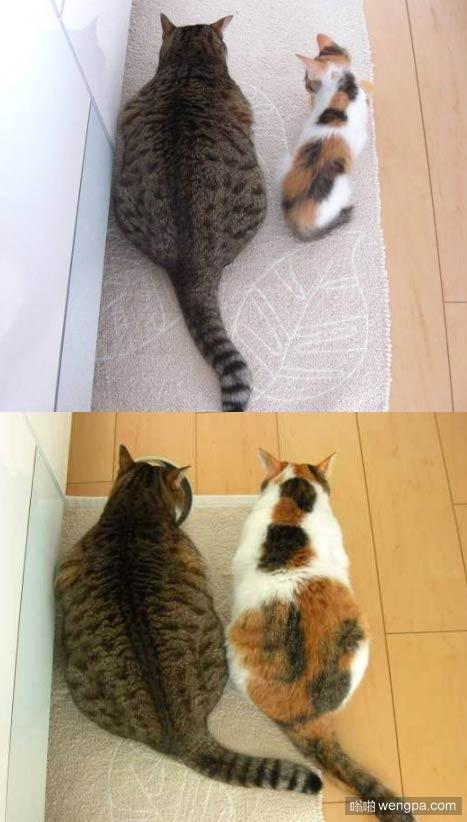 家里的猫猫太胖了,主人为了让它减肥 - 嗡啪网
