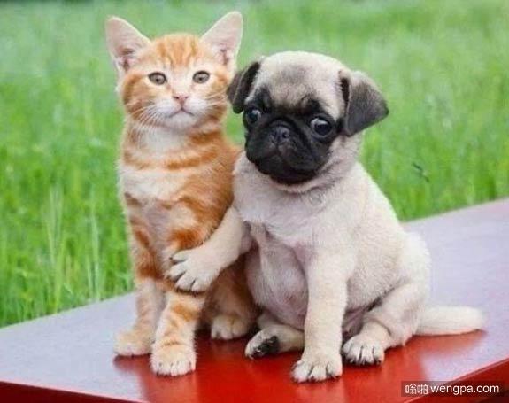不用担心 我会照顾好你的 猫和狗萌宠图片