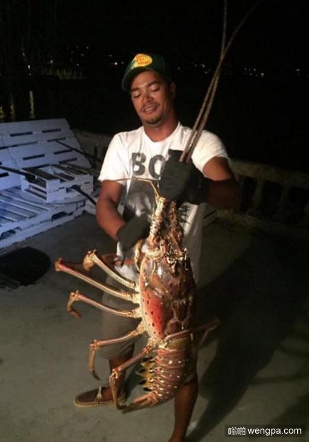 巨型龙虾 6.35公斤  这算世界上最大的龙虾了么 - 嗡啪网