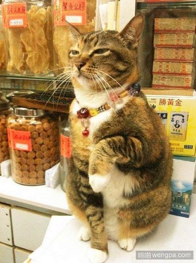 招き猫 招财猫真实版