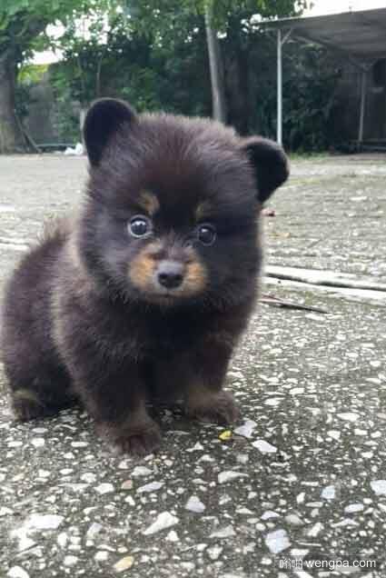 小狗还是小熊 萌宠图片 - 嗡啪网
