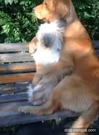 【视频】这年头连狗都恋爱了 狗狗情侣谈恋爱搞笑视频 - 嗡啪网