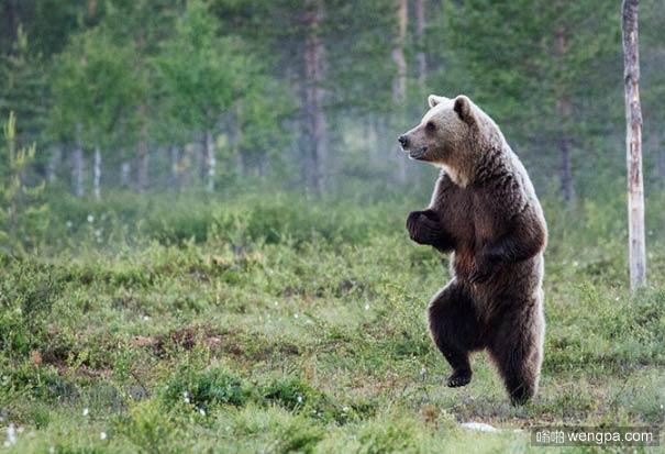 高高兴兴上学去 熊可爱萌宠图片
